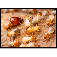 Buy High Effect Professional Termite Treatment CAS 120068-37-3 Fipronil 0.5% DP at wholesale prices