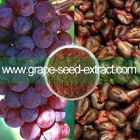 Vigorous natural organic grape seed extract powder