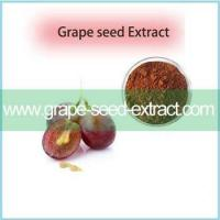 Quality Best Pirce Grape Seed Extract Of Resveratrol CAS 501-36-0 With Excellent Quality for sale