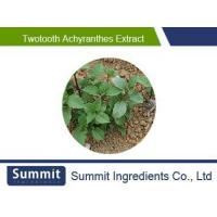 Quality Twotooth achyranthes extract 10:1,radix achyranthis bidentatae,Achyranthes bidentata,Twotooth Root for sale