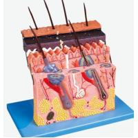 Quality Human Systems An Skin Section for sale